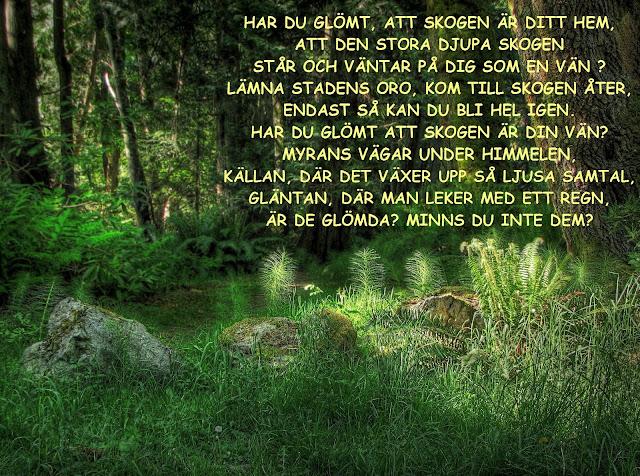 Skogen/ Bo Setterlind