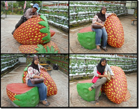 Cameron Highlands10