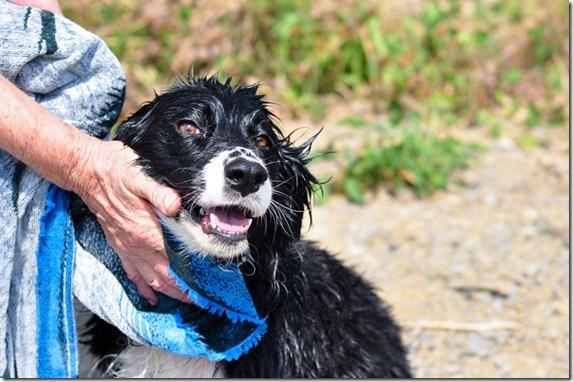 dog bath-4517