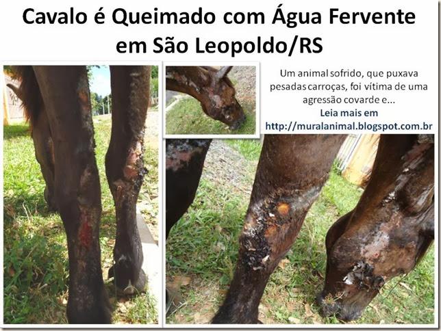 Cavalo é Queimado com Água Fervente