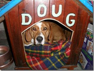 cane cuccia