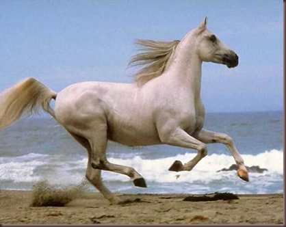 Amazing Animals Pictures Horse (3)