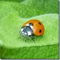130514_ladybird_thumbnail
