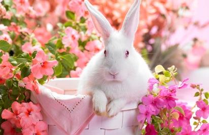 springtime_hare-wide