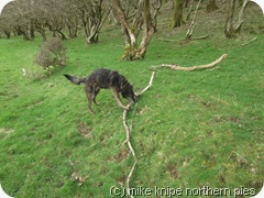a big twig
