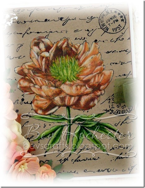 bev-rochester-joy!-old-letter-rose2