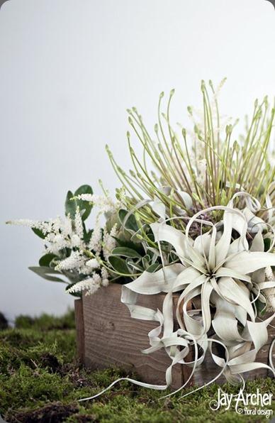Tillandsia  jay archer floral design