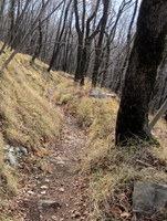 Spust po gozdnatem pobočju