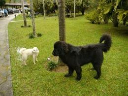 Dogs Trekking 4 (77_1) (4)