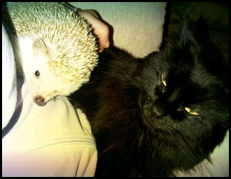 hedgie and misty
