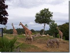 2004.08.25-048 savane africaine