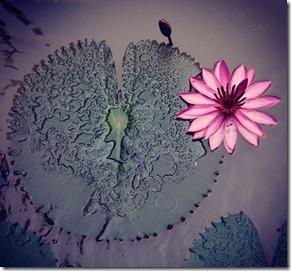 Flor Autora Adriana Lacerda