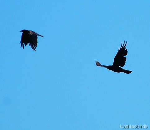 13. crows-kab