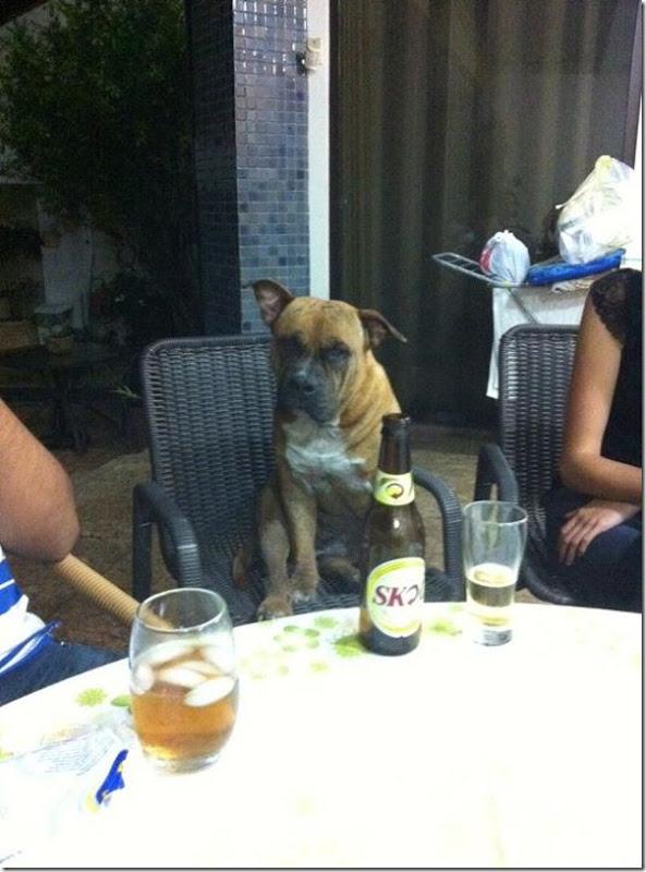 Brutus tomando uma cerveja com os amigos do patinhas carentes