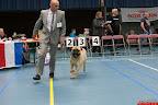 20130510-Bullmastiff-Worldcup-0653.jpg