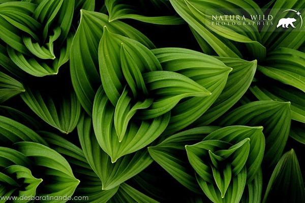 natureze-nature-padrao-pattern-desbaratinando (29)