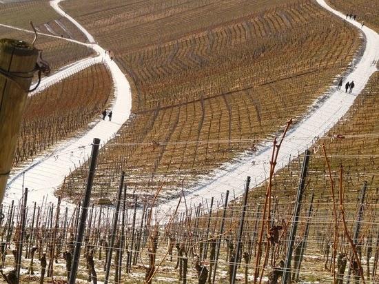Vineyard 16409 640