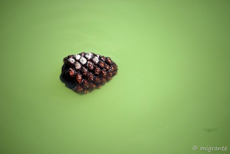 flotando - parque del retiro - madrid