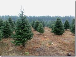 Tree Cutting-2