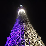 the Tokyo SkyTree by night in Roppongi, Tokyo, Japan