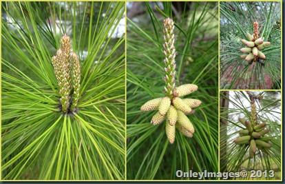 pollen collage