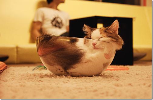 gatos en tarros de cristal