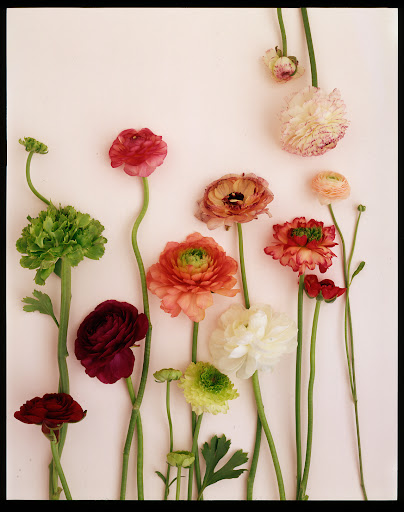 R:  Ranunculus comes in a wide range of colors, perfect for a spring arrangement.