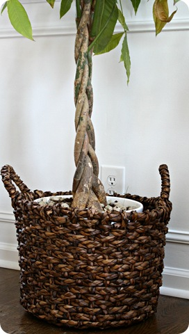 plants in baskets