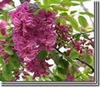 clip_image06652