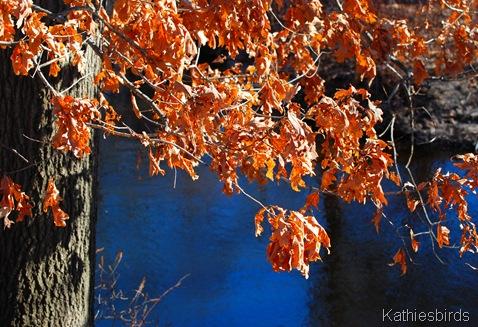26. oak leaves-kab