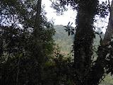 Looking towards the forested summit of Gunung Manglayang (Dan Quinn, November 2012)