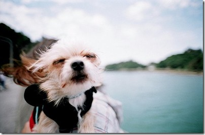 fotos gradiosas de perros capitanpalomo (14)