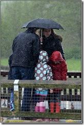 Slimbridge - Mostly raining