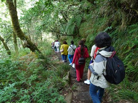 Trekking pe munte in Madeira