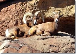 AZ Sanora Desert Museum 063