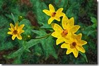 AE-WatercolorSponge-05-600