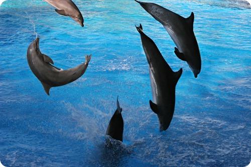 delfini4