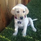 tule puppy.jpg