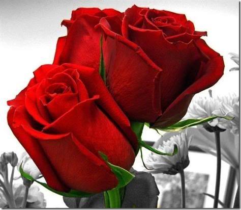 san valentin flores (6)