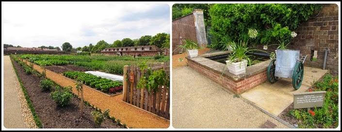 1  Kit chen garden