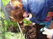 Planting school garden 015.jpg