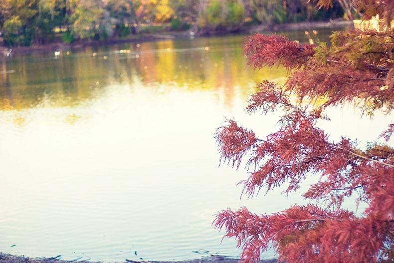 austin_autumn
