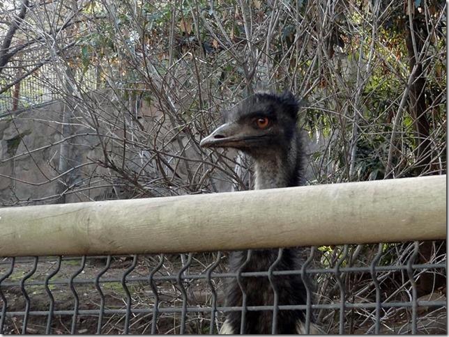 Santiago_Zoo_DSC03952