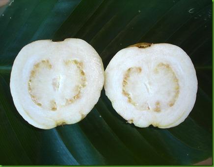 White Guava (3)