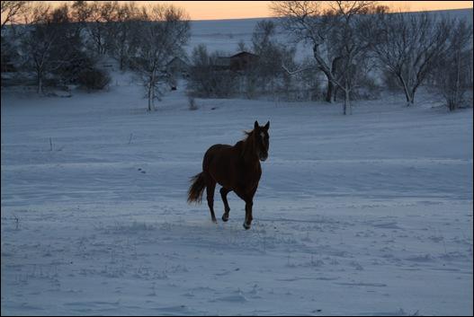 snow horses 035