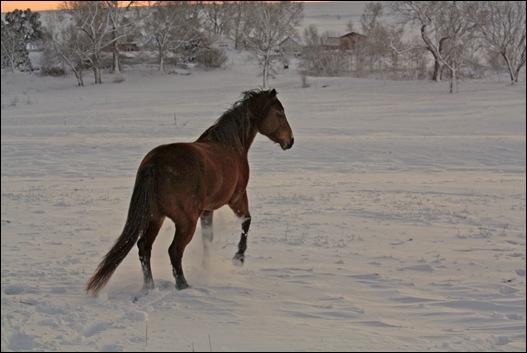 snow horses 058a