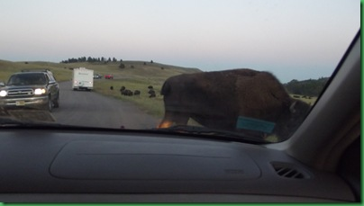 Driving the Custer Loop 179