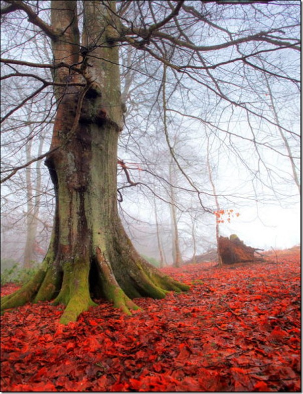Lindas imagens de folhas do outono (17)