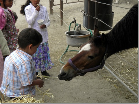 papi feeding the horse