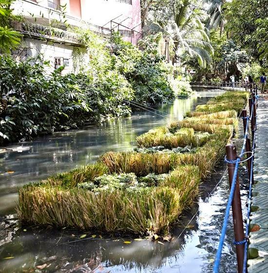 Plantas Rio Pasig 09